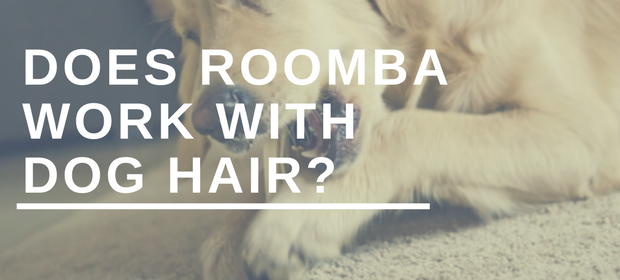 Does Roomba Work With Dog Hair?