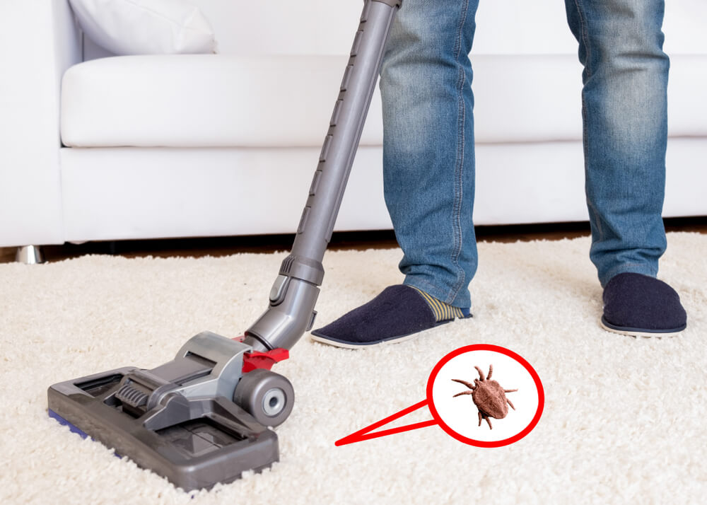 How long can fleas live in a vacuum cleaner