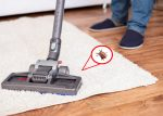 How often to vacuum for fleas?