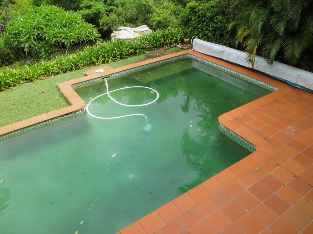 dirty green swimming pool with a vaccum