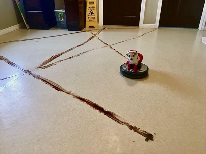 How To Clean a Roomba That Ran Over Poop