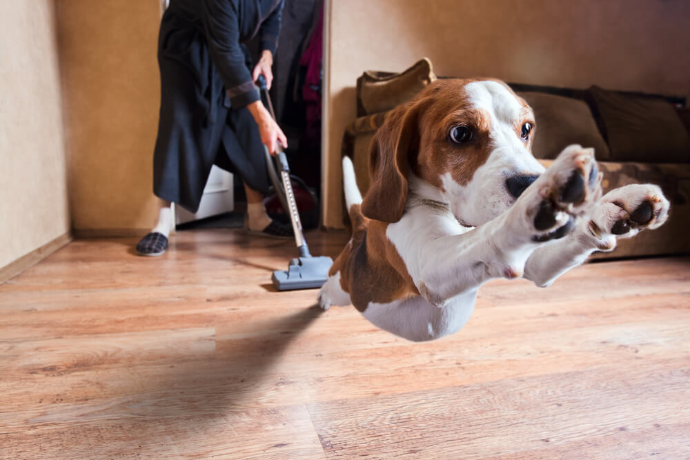 Why are dogs scared of vacuums